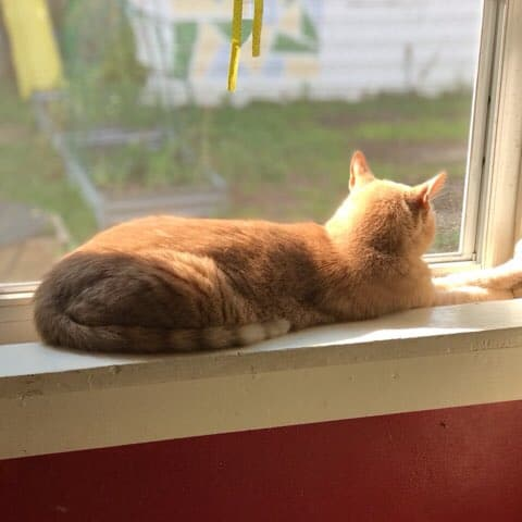 cat in sunlight