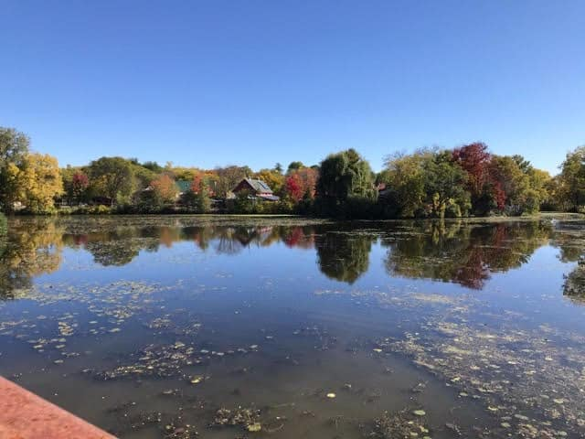 Henry Vilas Zoo in the fall