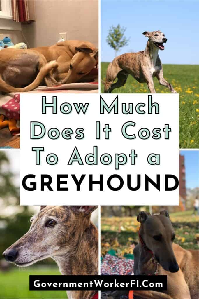 how much do greyhounds cost pinterest pin